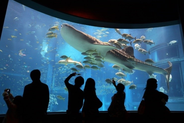 Kaiyukan Aquarium